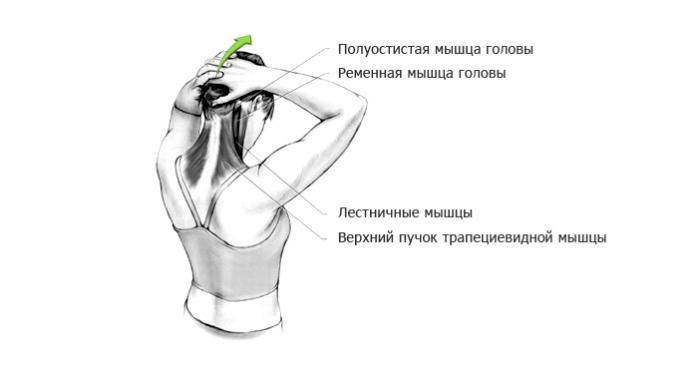 Растяжка мышц шеи (часть 3)